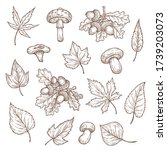 autumn leaves  mushrooms and... | Shutterstock .eps vector #1739203073