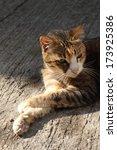 cat | Shutterstock . vector #173925386