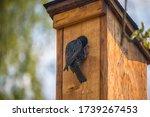 Bird On A Birdhouse   Starling...