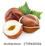 Hazelnut With Leaves. Hazelnut...