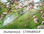Sparrow Bird Sits In A Spring...