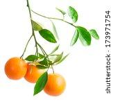 Branch With Fresh Ripe Orange...