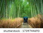 The Nature Of Japan. Sagano...