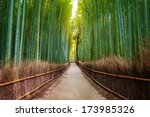 bamboo forest in japan ... | Shutterstock . vector #173985326