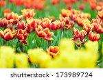 nature landscape  nature ... | Shutterstock . vector #173989724