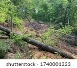 Small photo of A landslide next to a jeep road at Frozen Head State Park, Zeek Ridge Trail, Morgan County, Tennessee