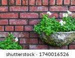 White Petunia On Semi Circular...