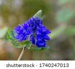Exotic Blue Flowerhead In...