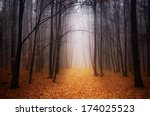 Foggy Forest During Autumn