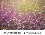 sunbeam reflected branch and...   Shutterstock . vector #1740303716