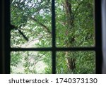 View Of Tree With Green Leaves...