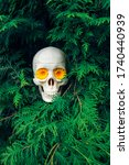 Human Skull With Yellow Flower...
