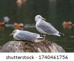 two seagulls are sitting on a... | Shutterstock . vector #1740461756