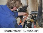farmer injects dry cow therapy... | Shutterstock . vector #174055304