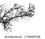 tree branch. vector | Shutterstock .eps vector #174069536