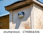 Tree Swallow Peeking Out Of Th...