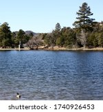 Landscape/waterscape of a mallard duck swimming in Goldwater Lake in Prescott, Arizona