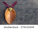 tree.label.leaves | Shutterstock . vector #174114344