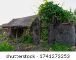 Old Ruined House In Ivy