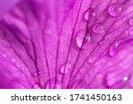 Violet Blue Flowers Of Wild...
