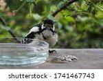Wild Bird Eating In Feeding...