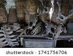 Old Bull Skull With Horns