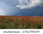 Field Of Red Poppys Against The ...