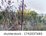 Fragment Of The Old Fence With...