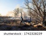 forest fire  large burned trunk ... | Shutterstock . vector #1742328239