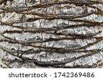 Palm Tree Bark Texture. Palm...