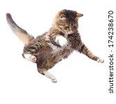 Stock photo portrait of a cute flying fluffy kitten 174238670