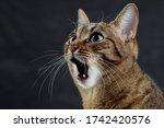 Close Up Portrait Of A Cat Is...