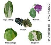 cabbage types set  vector...   Shutterstock .eps vector #1742493020
