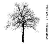 tree vector illustration. | Shutterstock .eps vector #174256268