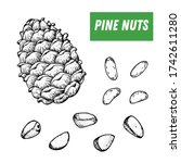 pine nuts hand drawn sketch.... | Shutterstock .eps vector #1742611280