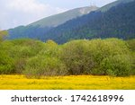 A Meadow Full Of Yellow Flowers....