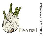 fennel educational material for ... | Shutterstock .eps vector #1742891873