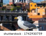 A Seagull Proudly Sitting On A...