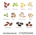 Beans And Legumes Set. Vector...