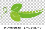 an open pod of green peas with... | Shutterstock .eps vector #1743198749
