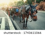 Romantic Carriage With Horse...