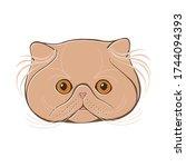 Persian Cat  Face.  Hand Drawn...