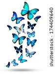 Many Different Butterflies ...