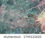 Cuban Bonefish Sendero Enigma...
