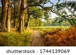 Forest Trail In Autumn Scene....