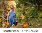 Scarecrow In Autumn Fall Garden ...