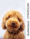 Portraiture Joyful Puppy...