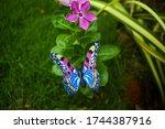 Cute Pair Of Blue Diy Butterfly ...