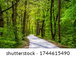 Green forest pathway view. Forest pathway landscape. Pathway in forest