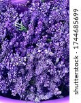 French Lace Purple Lavender ...
